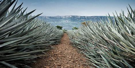 Ruta del Tequila en Guadalajara